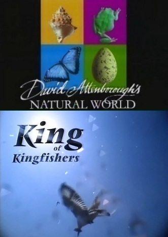BBC: Наедине с природой: Король зимородков - (BBC: King of kingfishers)