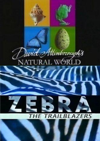 BBC: Наедине с природой: Зебры первопроходцы - (BBC: ZEBRA the Trailblazers)