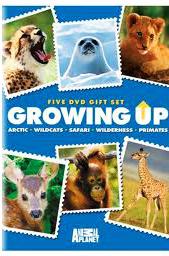 Animal Planet: Как вырастить гепардов - (Animal Planet: Growing up cheetah)