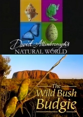 BBC: Наедине с природой: Волнистые попугайчики - (BBC: The wild Bush Budgie)