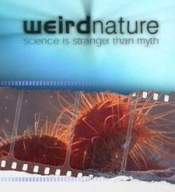 ������� �������: �������������� �������� - Weird Nature: Fantastic Feeding