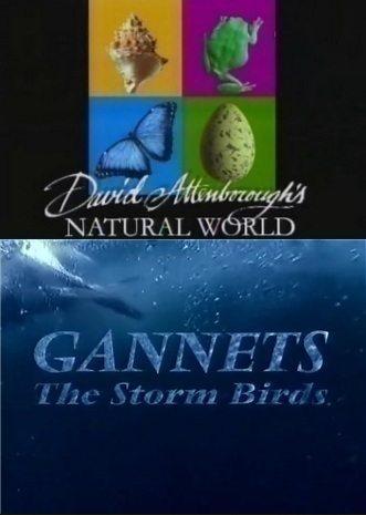 BBC: Наедине с природой: Олуши - штормовые птицы - (BBC: GANNETS The Storm Birds)
