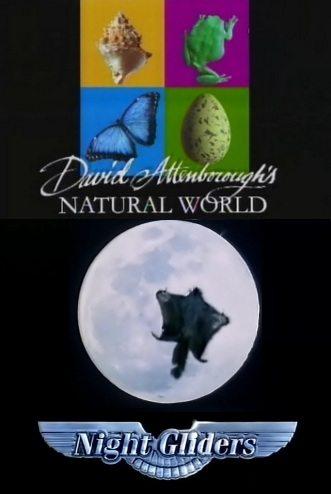BBC: Наедине с природой: Ночные планеристы - (Night Gliders)