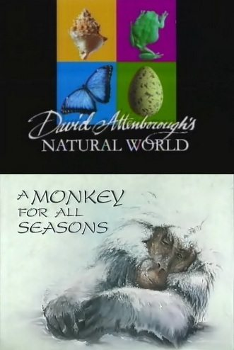 BBC: ������� � ��������: �������� �� ��� ������� ���� - (A Monkey for all seasons)
