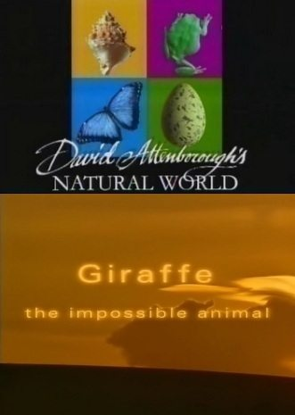 BBC: Наедине с природой: Жирафы - (BBC: Giraffe the impossible animal)