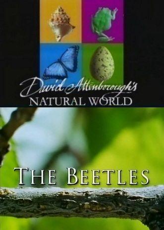 BBC: Наедине с природой: Жуки-рекордсмены - (BBC: The Beetles)