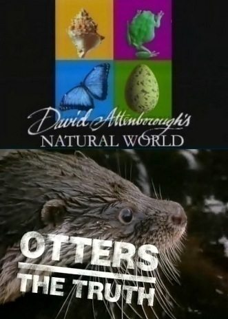 BBC: Наедине с природой: Правда о выдрах - (BBC: Otters the truth)