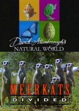 BBC: Наедине с природой: Скандальные сурикаты - (BBC: MEERKATS Divided)