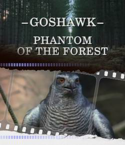 ������ ������� - Phantom Of The Forest