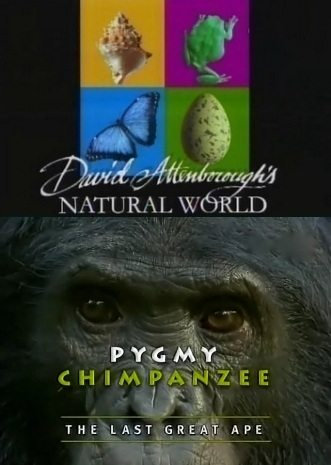 BBC: Наедине с природой: Карликовые Шимпанзе - (BBC: Pygmy Chimpanzee)