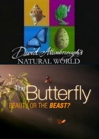 BBC: Наедине с природой: Бабочка красавица или чудовище - (BBC: The Butterfly beauty or the beast?)