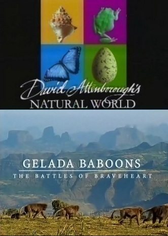BBC: Наедине с природой: Обезьяна гелада - битва храброго сердца - (BBC: Gelada baboons)