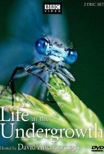 BBC. ����� � ��������� - (BBC. Life in the Undergrowth)