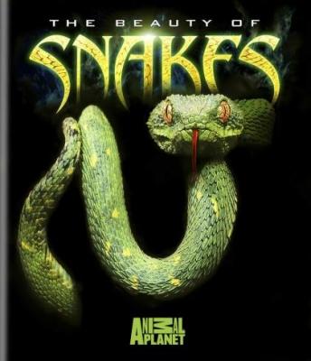 Красота змей - (The Beauty Of Snakes)