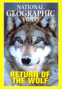National Geographic: Возвращение волка - (Return of the Wolf)