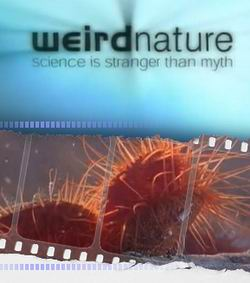 Загадки природы: Неожиданные партнеры - Weird Nature: Puzzling Partners
