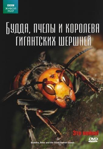 BBC: Живой мир (Мир природы): Будда, пчелы и королева гигантских шершней - (The Natural World. Buddha Bees and the Giant Hornet Queen)