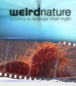 Загадки природы: Удивительное движение - Weird Nature: Marvellous Motion