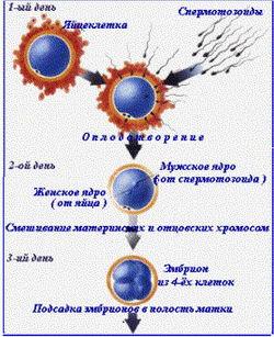 Большой взрыв: Непорочное зачатие - Neporochnoe zachatie