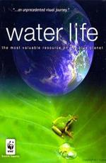 Водная жизнь - (Water Life)