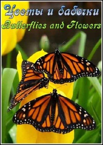 ����� � ������� - (Butterflies and Flowers)