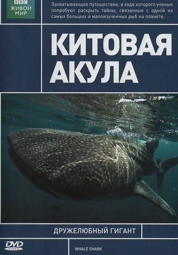BBC: Китовая акула - (BBC: Whale Shark)