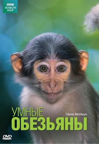 BBC: Умные обезьяны - (Clever Monkeys)