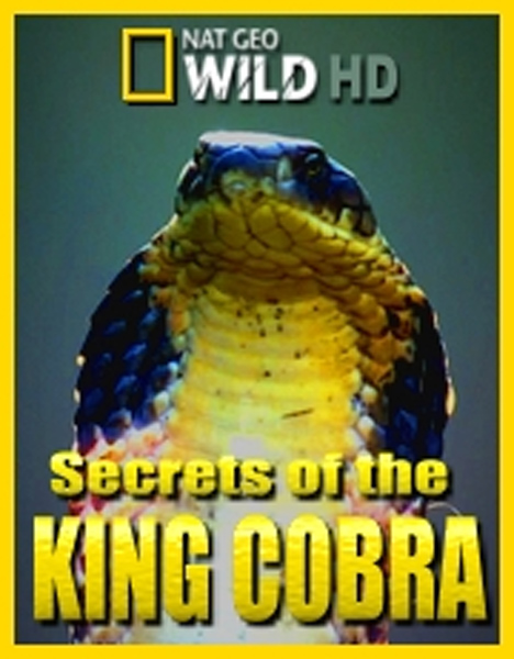 National Geographic: ������� ����������� ����� - (Secrets of the King Cobra)
