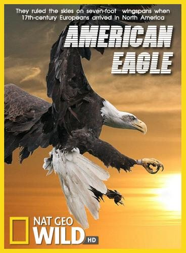 National Geographic: Белоголовый орлан - (National Geographic: American Eagle)
