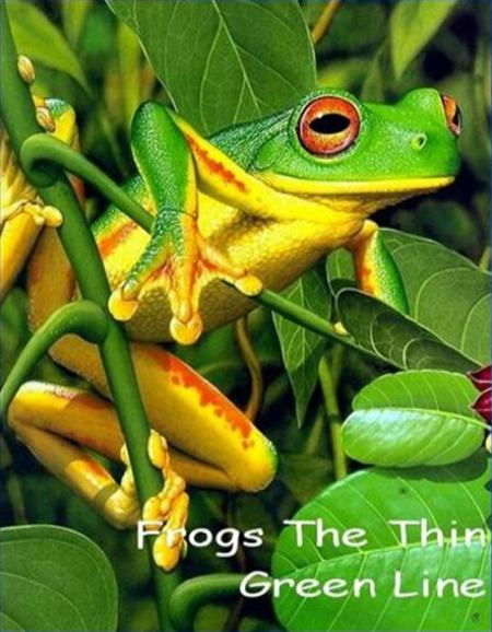 National Geographic: ������� �� ����� ������������ - (Frogs The Thin Green Line)
