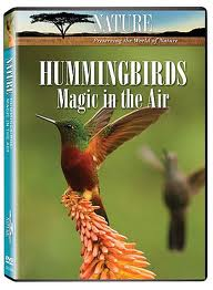 National Geographic: Жизнь колибри. Волшебство в воздухе - (National Geographic: Hummingbirds. Magic in the air)