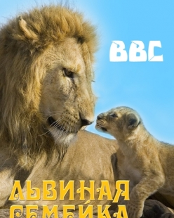 BBC: Львиная Семейка - BBC: Pride