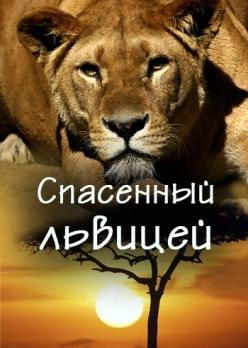 Спасенный львицей - Saved by the lioness