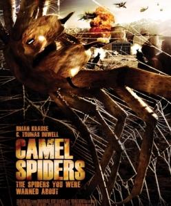 Верблюжьи пауки - Camel Spiders