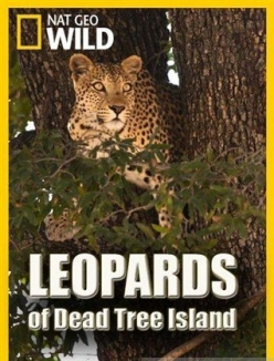 Леопарды дельты Окаванго - Leopards of Dead Tree Island