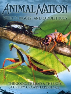 ����� ������� � �������� ���� � ���� - Worlds Biggest and Baddest Bugs