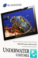 Подводный мир Косумель - (BluScenes : Underwater Cozumel)