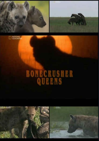 National Geographic: ����� - ������ �������� - (Bonecrusher Queens)