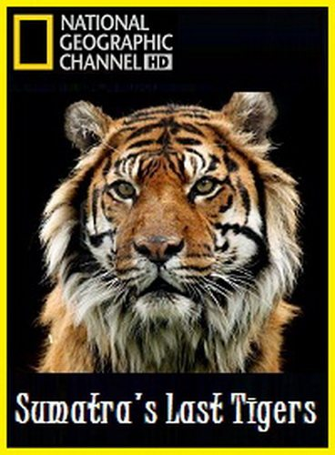 National Geographic: ��������� ���� ������� - (Sumatra's Last Tigers)