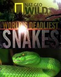 National Geographic: ����� ������� ���� � ���� - (National Geographic: World's deadliest snakes)