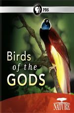 BBC: Живой мир (Мир природы): Райские птицы - (BBC:  Natural World. Birds of Paradise)