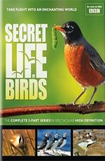 BBC. Тайная жизнь птиц - (BBC. Secret Life of Birds)