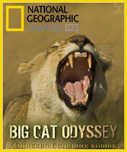 National Geographic: Одиссея больших кошек - (Big Cat Odyssey)