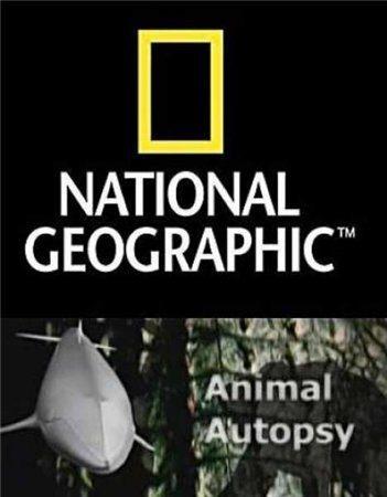 National Geographic: Анатомия крупнейших животных - (Animal Autopsy)