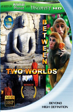 Discovery: Дикая Азия: Меж двух миров - (Discovery: Wild Asia: Between Two Worlds)