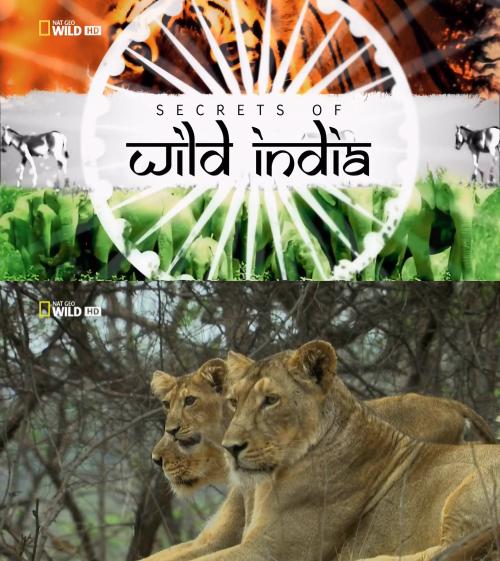 Тайны дикой природы Индии: Львы пустыни - (Secrets of Wild India: Desert Lions)