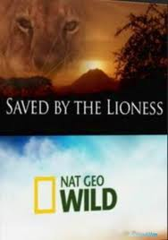National Geographic: Спасенный львицей - (National Geographic: Saved by the lioness)