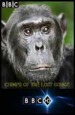 BBC: �������� - ���� �� �����? - (BBC: Chimps of the Lost Gorge)