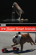 BBC: Гении из царства животных - (BBC: Super Smart Animals)