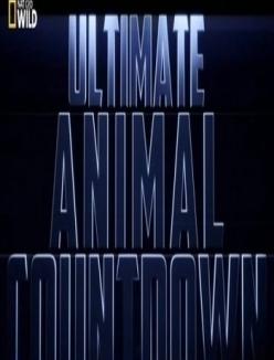 Животные-рекордсмены: Стаи - Ultimate Animal: flocks